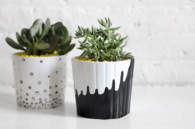 home decor plants