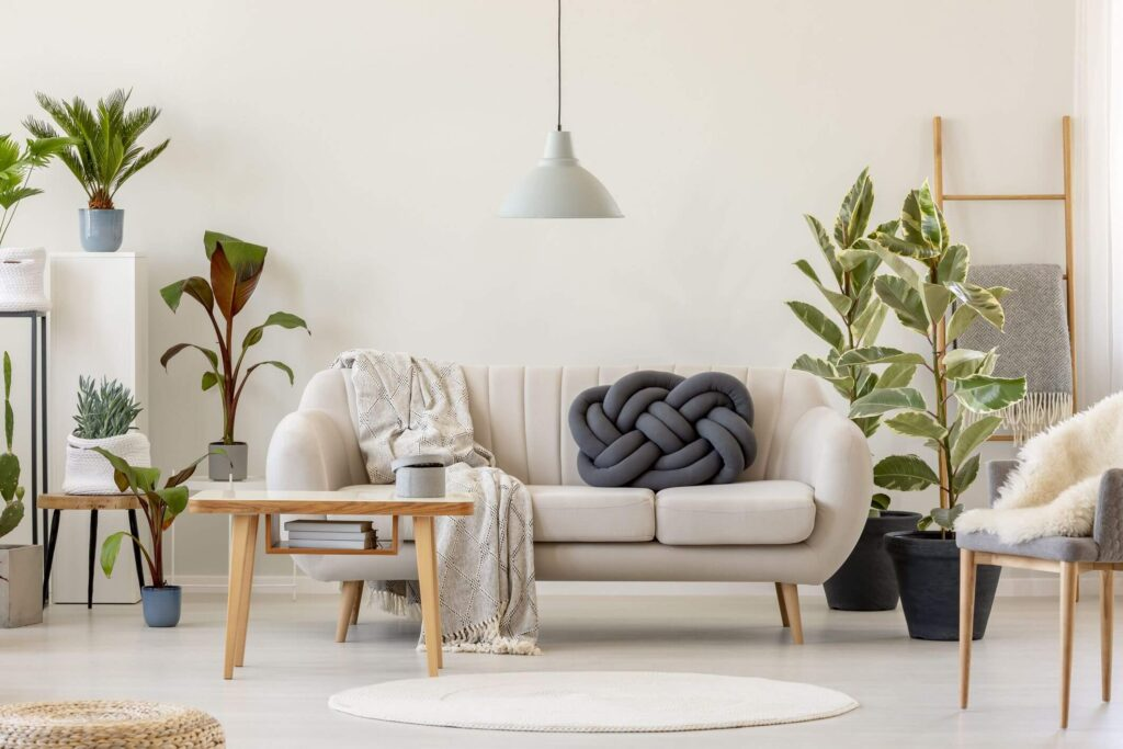 living room plants ideas
